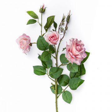Rosen und Pfingstrosen