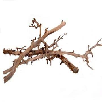 Korkenzieher-Zweige